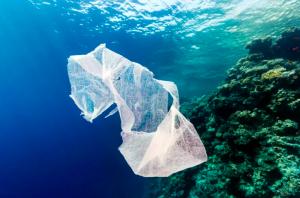 Marine life shreds plastic